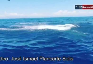 Primer avistamiento de ballenas en la costa de Lázaro Cárdenas